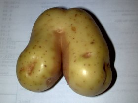 Amusing comedy vegetable
